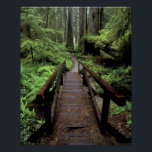 "NA, USA, California, Jedidiah Smith Redwoods Poster<br><div class=""desc"">COPYRIGHT Darrell Gulin / DanitaDelimont.com | US05 DGU0032.jpg | NA,  USA,  California,  Jedidiah Smith Redwoods State Park,  Bridge over stream and redwoods</div>"
