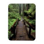 NA, USA, California, Jedidiah Smith Redwoods Rectangular Photo Magnet