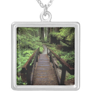 NA, USA, California, Jedidiah Smith Redwoods Silver Plated Necklace