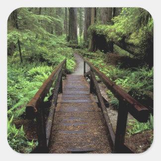 NA, USA, California, Jedidiah Smith Redwoods Square Sticker