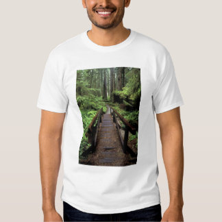 NA, USA, California, Jedidiah Smith Redwoods T-Shirt