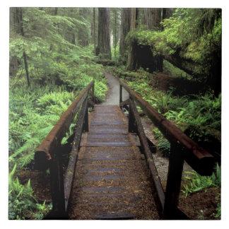NA, USA, California, Jedidiah Smith Redwoods Large Square Tile