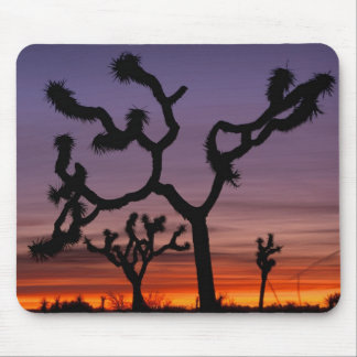 NA, USA, California. Joshua Tree National Mouse Pad