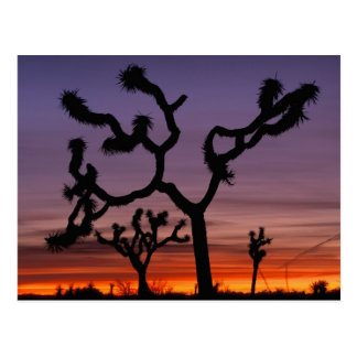 NA, USA, California. Joshua Tree National Postcard
