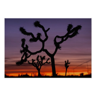 NA, USA, California. Joshua Tree National Poster