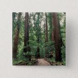 NA, USA, California, Marin County, Muir Woods Button