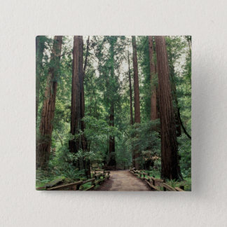 NA, USA, California, Marin County, Muir Woods Button