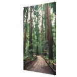NA, USA, California, Marin County, Muir Woods Gallery Wrap Canvas