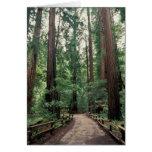 NA, USA, California, Marin County, Muir Woods Greeting Card