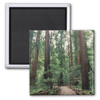 NA USA California Marin County Muir Woods Refrigerator Magnets