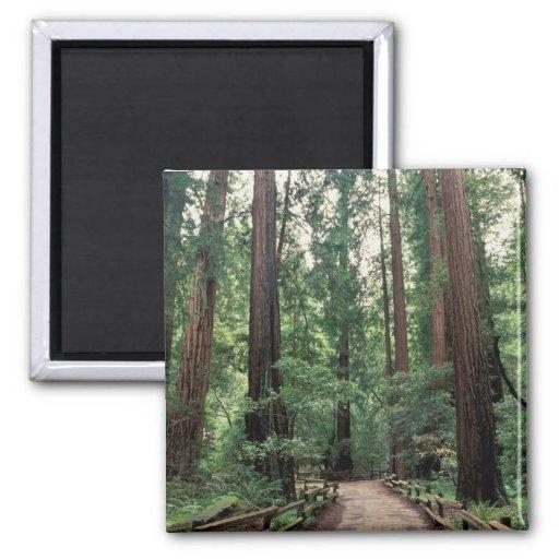 NA, USA, California, Marin County, Muir Woods Refrigerator Magnets