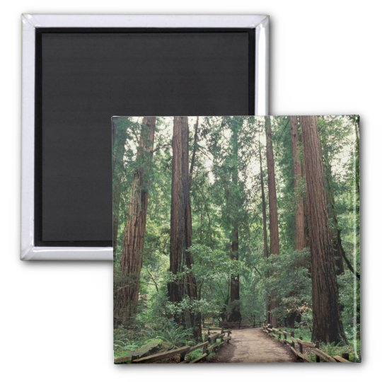 NA, USA, California, Marin County, Muir Woods Magnet