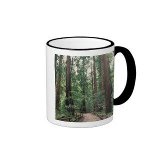 NA USA California Marin County Muir Woods Coffee Mugs