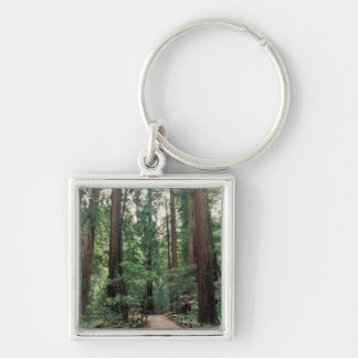 NA, USA, California, Marin County, Muir Woods Silver-Colored Square Keychain