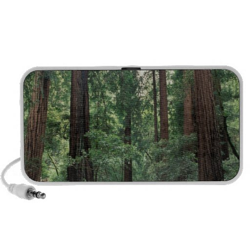 NA, USA, California, Marin County, Muir Woods Mp3 Speaker