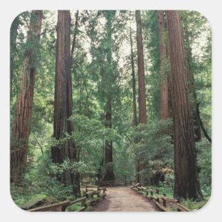 NA, USA, California, Marin County, Muir Woods Square Sticker
