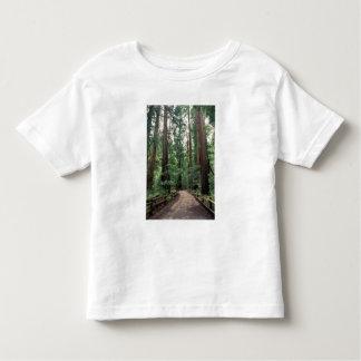 NA, USA, California, Marin County, Muir Woods Toddler T-shirt