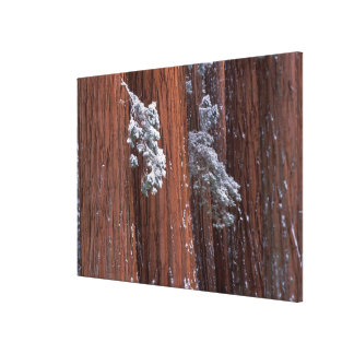 NA, USA, California. Sequoia National Park. 2 Stretched Canvas Print