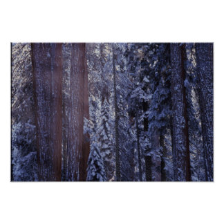 NA, USA, California. Sequoia National Park. 2 Poster