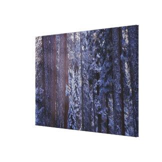 NA, USA, California. Sequoia National Park. Gallery Wrap Canvas