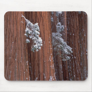 NA, USA, California. Sequoia National Park. Mouse Pad