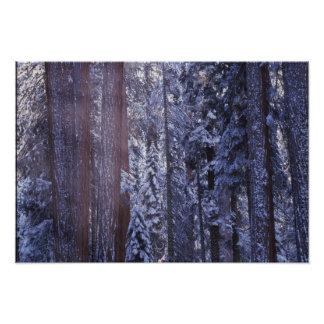 NA, USA, California. Sequoia National Park. Photographic Print