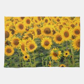 Na, USA, Colorado, Sunflowers Hand Towels
