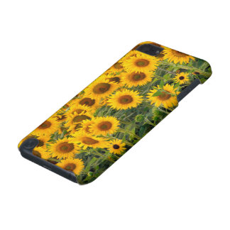 Na, USA, Colorado, Sunflowers iPod Touch 5G Cover