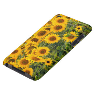 Na, USA, Colorado, Sunflowers iPod Touch Case