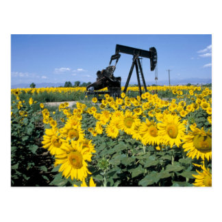 Na, USA, Colorado, Sunflowers, Oil Derrick Postcard