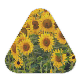 Na, USA, Colorado, Sunflowers Speaker