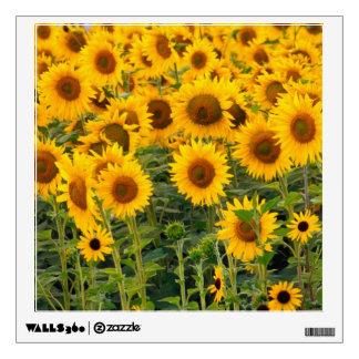 Na, USA, Colorado, Sunflowers Wall Sticker