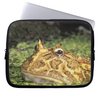 NA, USA, Florida, Miami.  Brazilian horned frog Computer Sleeve