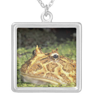NA, USA, Florida, Miami.  Brazilian horned frog Square Pendant Necklace