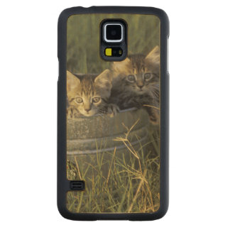 NA, USA, Florida, rural Florida. Eight-week-old Carved® Maple Galaxy S5 Case