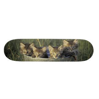 NA, USA, Florida, rural Florida. Eight-week-old Skateboard