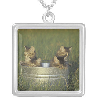 NA, USA, FLorida, rural Florida. Eight-week-old Square Pendant Necklace