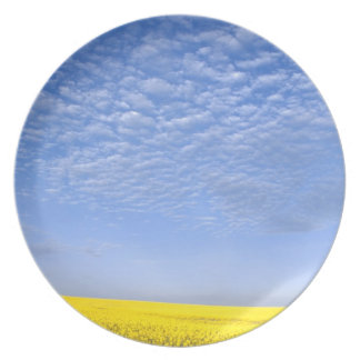 Na, USA, ID, Grangeville, Field of Canola Crop Dinner Plates