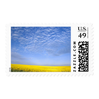 Na, USA, ID, Grangeville, Field of Canola Crop Postage