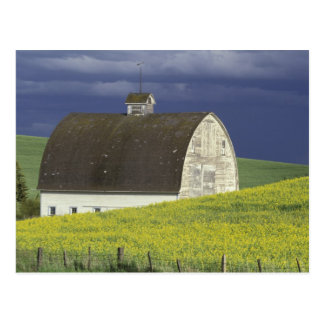 NA, USA, Idaho, south of Genesse, Canola field Post Cards