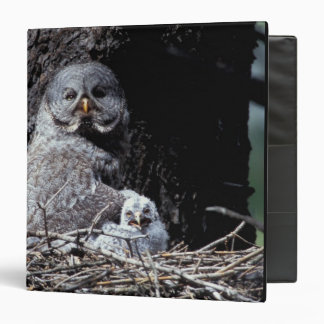 NA, USA, Idaho, Teton Valley. Great gray owl 3 Ring Binder