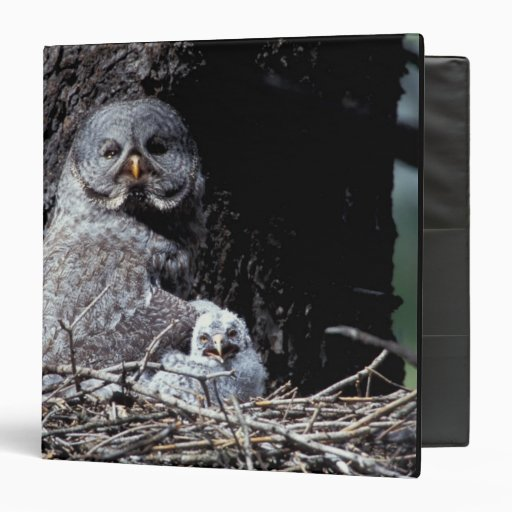 NA, USA, Idaho, Teton Valley. Great gray owl Vinyl Binders