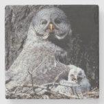 NA, USA, Idaho, Teton Valley. Great gray owl Stone Beverage Coaster