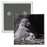 NA, USA, Idaho, Teton Valley. Great gray owl Pins