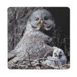 NA, USA, Idaho, Teton Valley. Great gray owl Puzzle Coaster