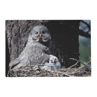 NA, USA, Idaho, Teton Valley. Great gray owl Placemat