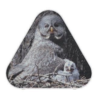 NA, USA, Idaho, Teton Valley. Great gray owl Speaker