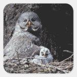 NA, USA, Idaho, Teton Valley. Great gray owl Square Sticker