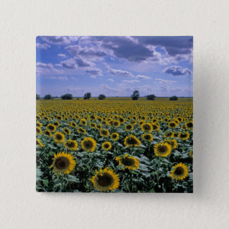 NA, USA, Kansas, Sunflower crop Pinback Button