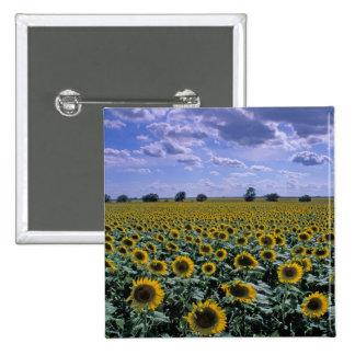 NA, USA, Kansas, Sunflower crop Pinback Button